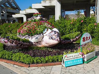 海洋博公園ー海豚秀劇場,海岸步道