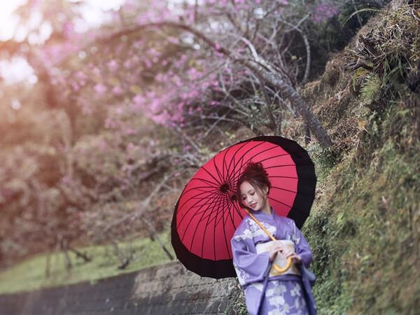 櫻花季限定套餐